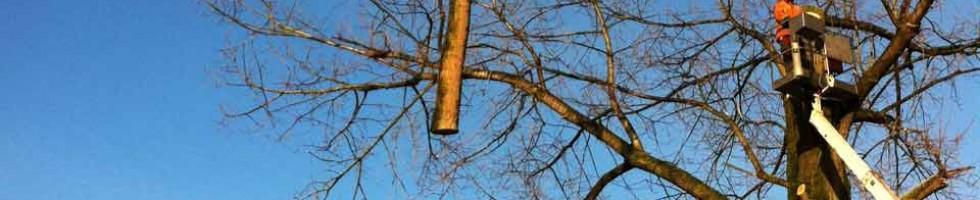 Effectief bomen kappen door Passie voor groen